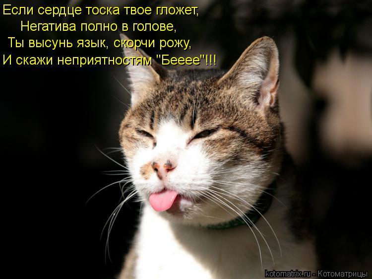 dlyakota_ru_kotomatricy_1331042671661