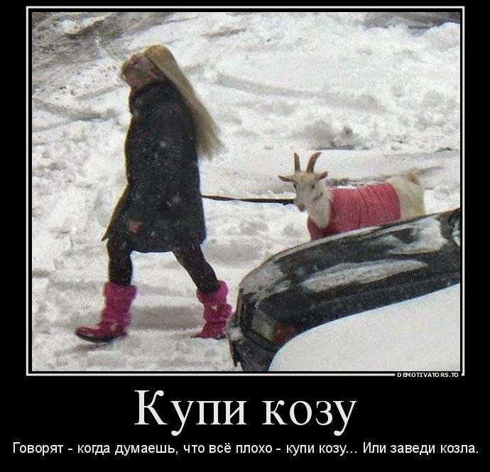 kupi-kozu