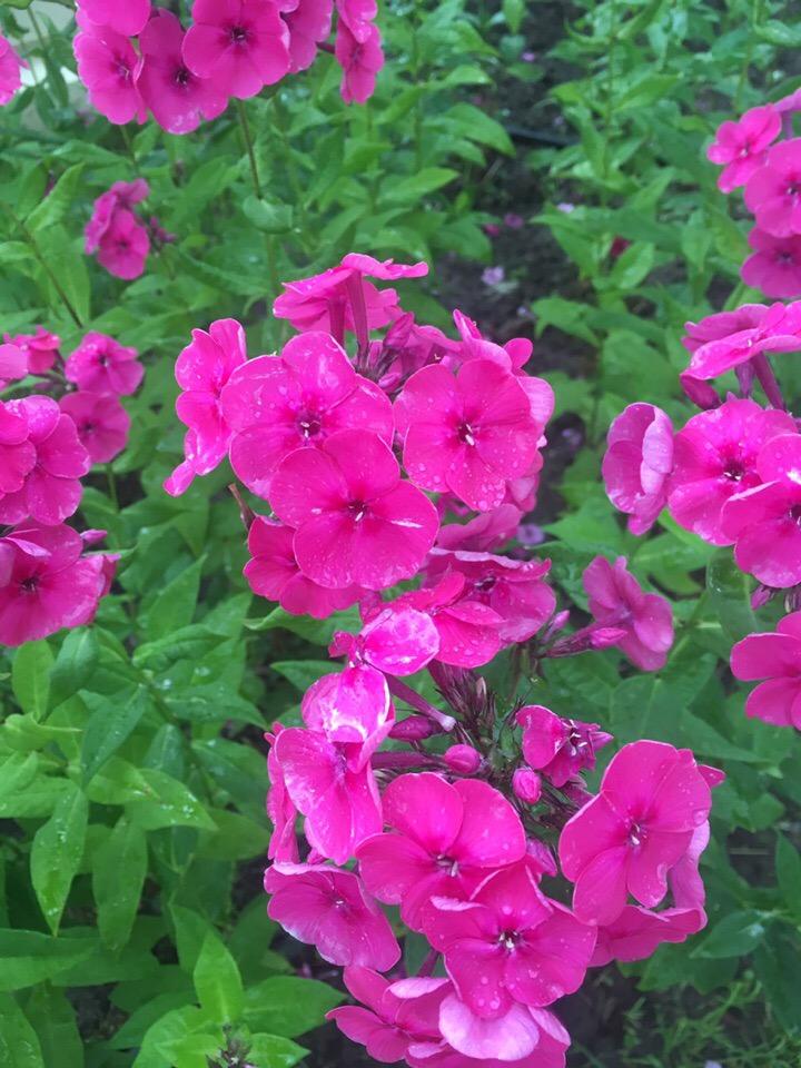 Цветочная красота на ВДНХ.