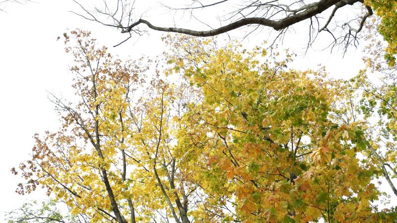 snapshot_08.jpg