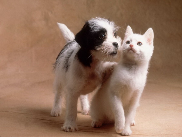 котенок и щенок18