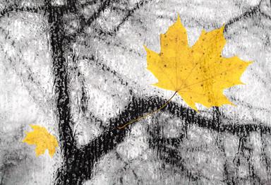 мокрые листья, как две ладони...