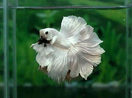 аквариумы9