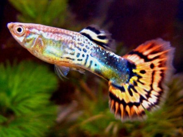 аквариумы12