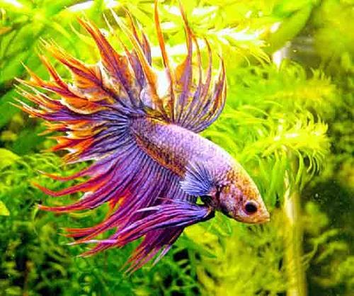 аквариумы17