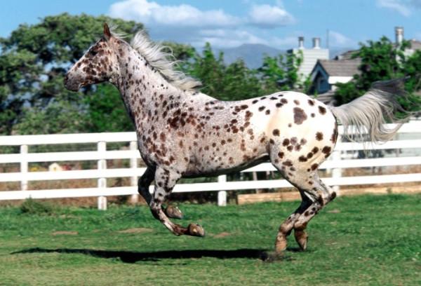 кони6