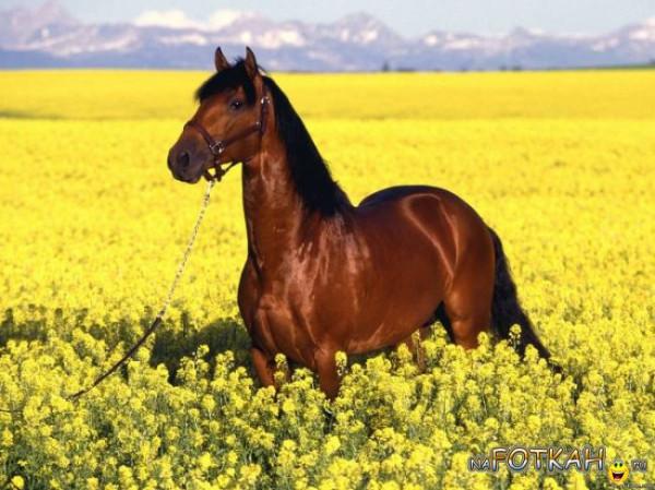 кони3