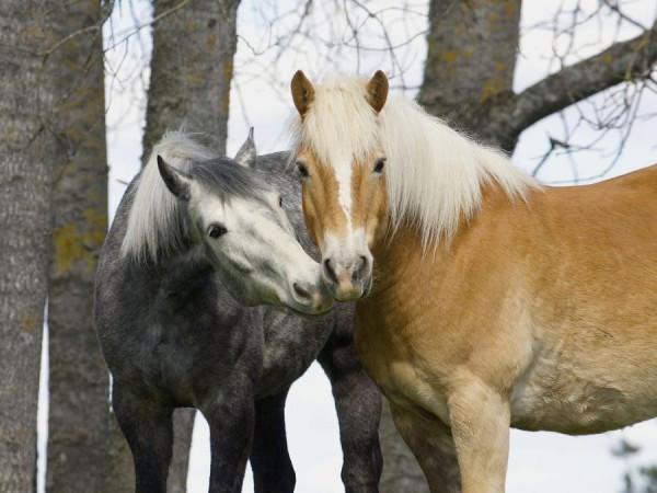 кони13