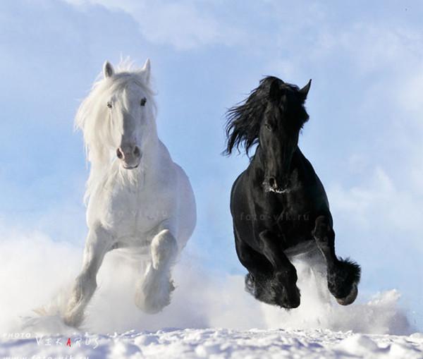 кони18