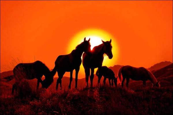 кони на закате