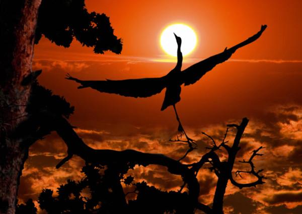 кровавый закат и птица