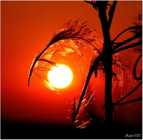 кровавый закат и травы