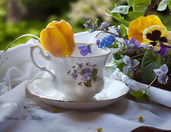 Фиалки свежесть, солнечность тюльпана...