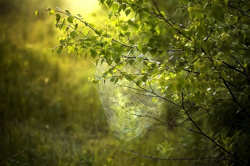 паутина на солнце