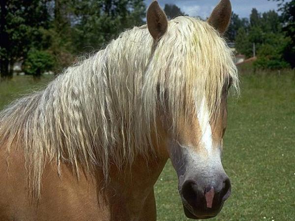 блондинко