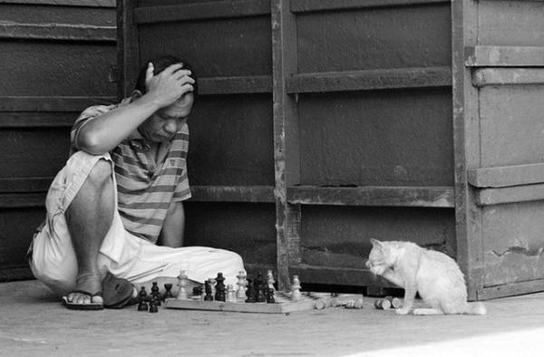 кот-шахматист2