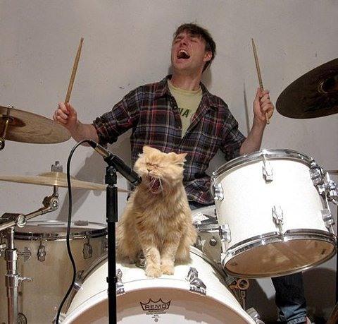 кот-солист и барабанщик отрываются