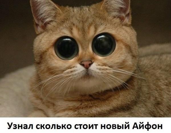 глаза на лоб у кота