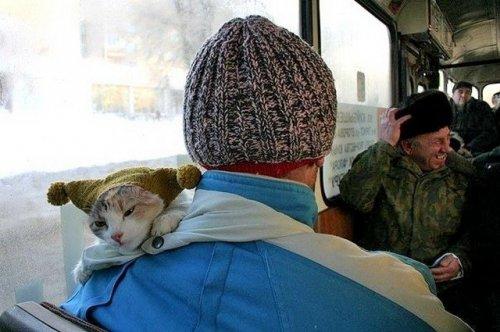 автобусный пассажир - кот в шапке