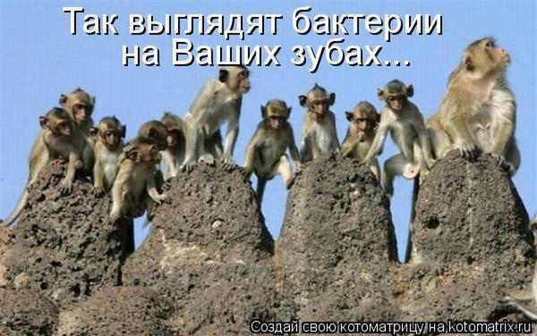 бактерии на зубах-обезьяны