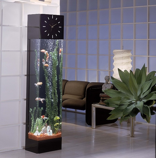 аквариум10