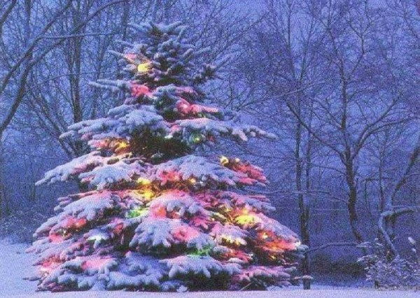 заснеженный лес и елка