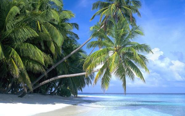 белый песок,пальмы на пляже