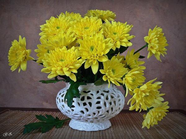 желт.хризантемы в бел.вазе
