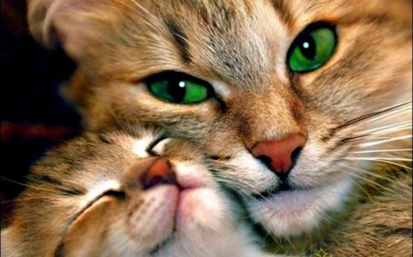 зеленоглазая кошка с котенком