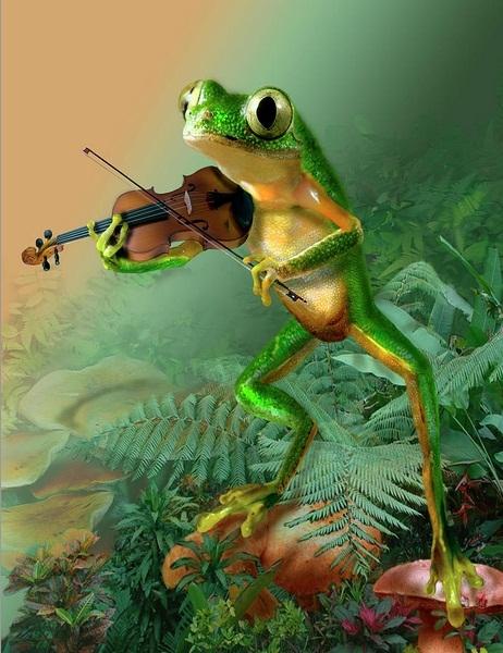 скрипачка-лягушка