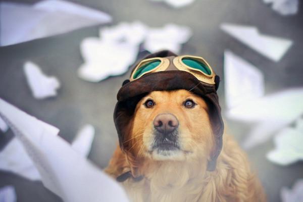 пес-летчик