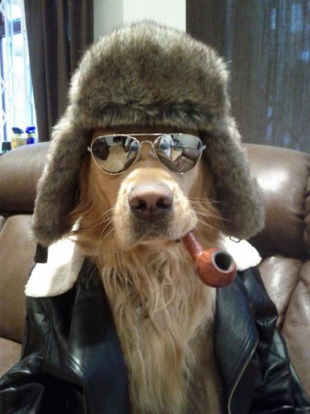 пес-пижон с трубкой