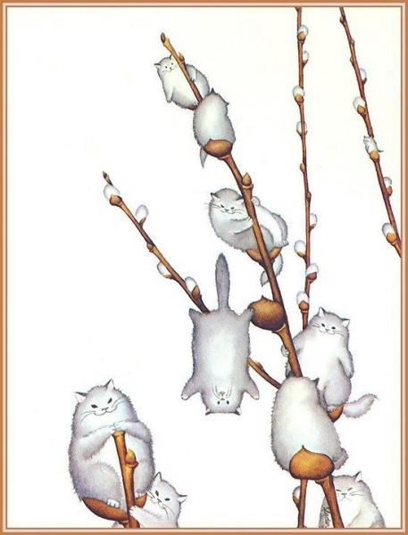 вербо-коты распустились