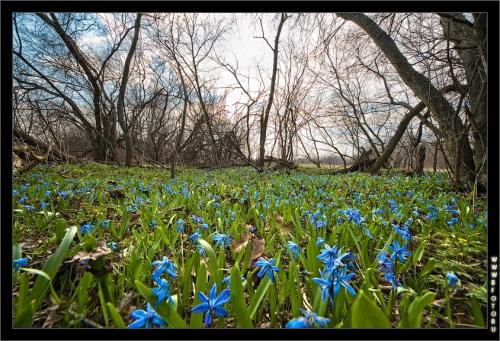 Весна отрывок из  романа