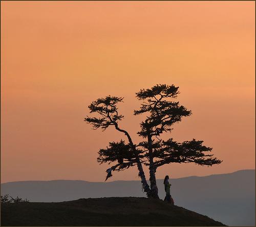 розовый закат и дерево