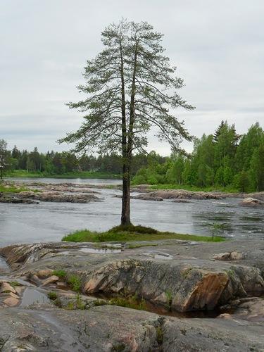 дерево в воде5