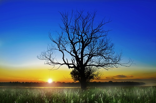 дерево на рассвете