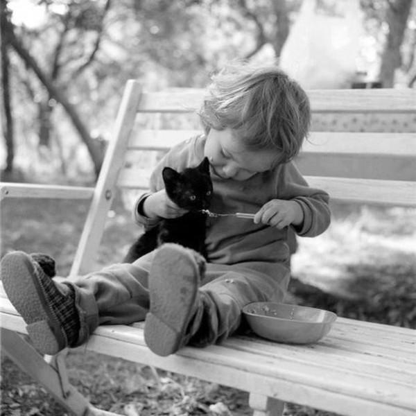 дети и кошки16