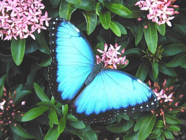 голубая нежная