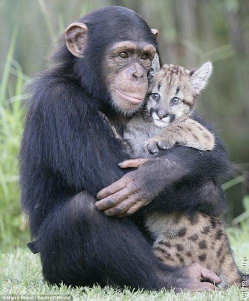 обезьяна и рысенок