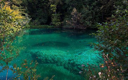 зеленая вода в пруду