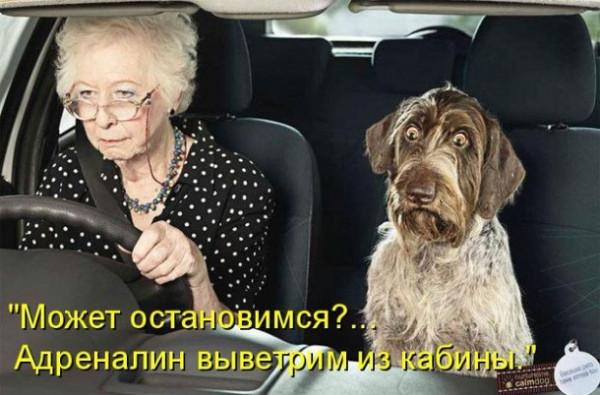 очумевший от езды пес