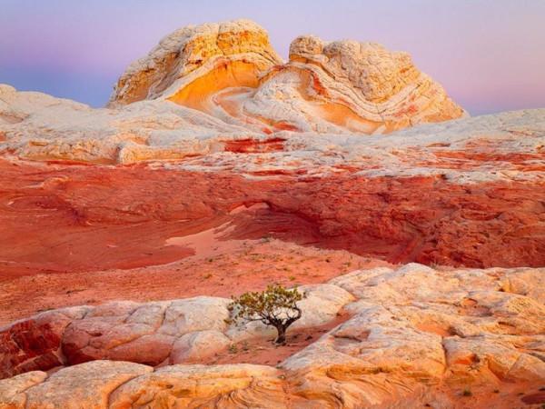 дерево в скалах