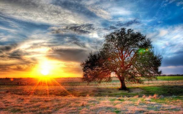 дерево в техасе