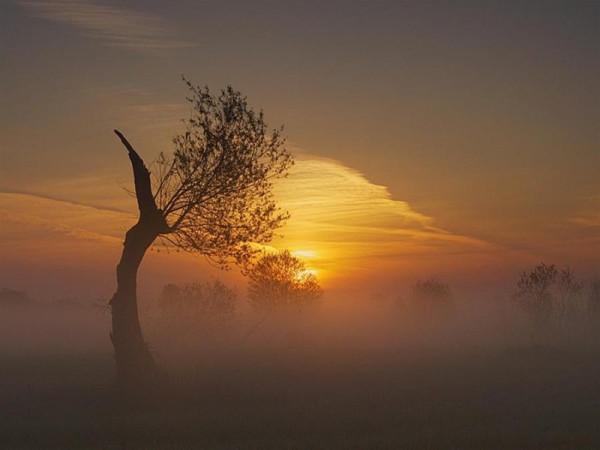 дерево в тумане заката
