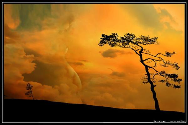 дерево на оранж.игорьзенин
