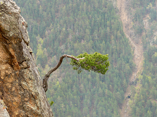 дерево на скале