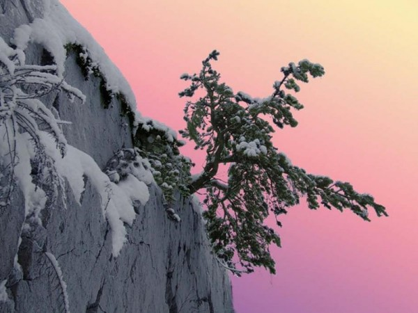 деревья на скалах2