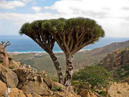 деревья удивительные