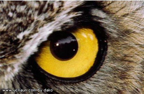 глаза4